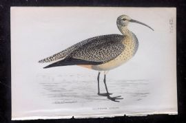 F. O. Morris 1867 Hand Col Print. Esquimaux Curlew